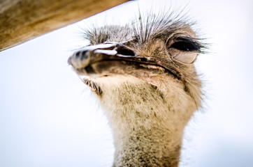Ostrich squinted and looked at the camera incredulously.