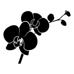 Orchid vector icon.