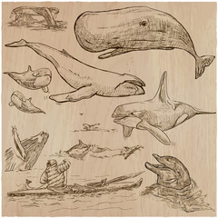 Cetaceans, Cetacea - An hand drawn pack, vector sketching