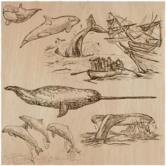 Cetaceans, Cetacea - An hand drawn vector pack, collection