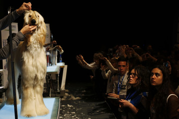People take pictures of an Afghan dog after having been groomed during a master class at Propet pet fair at IFEMA fairgrounds in Madrid