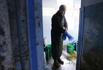 Farmer Steve Hook prepares to milk his cows in the milking parlour at Longleys Farm in Hailsham