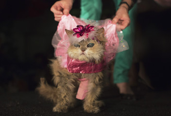 "A blind Persian cat ""Million Dollar Baby"" is presented at the ""Furry Friends on the Runway"" doggie fashion event at the Ritz Plaza Park"