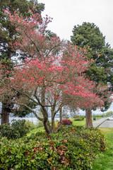 City Park Dogwood Tree 3