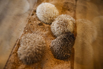 The Wider Image: Tokyo's Hedgehog cafe