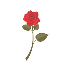 Red Rose Vector Template Design