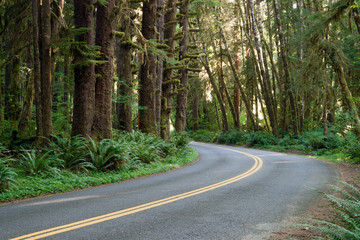Curve In The Road Hoh Rain Forest Washington State