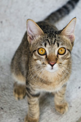 Young cat looks up at a camera