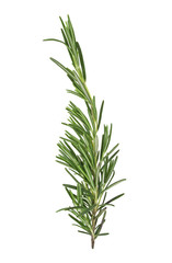 Rosemary sprig isolated on white background