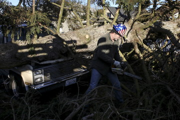 A worker removes limbs from a fallen tree with a chainsaw in preparation for lifting it from atop a truck in Everett
