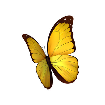 Butterfly yellow isolated on white background. Butterflies Insects Lepidoptera Morpho amathonte. Emblema icons vector illustration