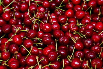 Background from fresh cherries with a twig