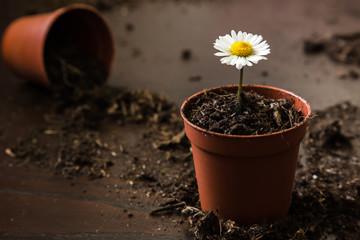 A little flower in a pot