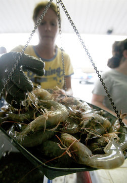 Ruth's Seafood employee Fay Taravelle, weighs in shrimp as sales go down at the Shrimp Lot in Westwego