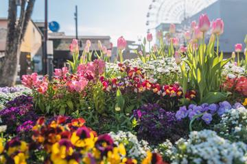 街角の綺麗な花壇