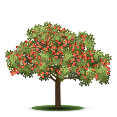 apple tree with red fruits