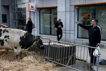 A man takes a photograph of a cow outside the EU agriculture ministers meeting as farmers protest against low selling prices in central Brussels