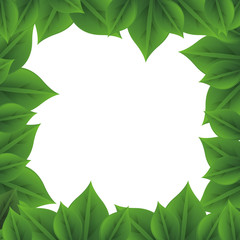 leaves nature frame vector icon illustration graphic design