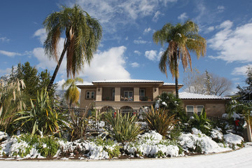 Snow clings to palm trees at a subdivision home after a storm brought snow to many southern California locales, in Yucaipa