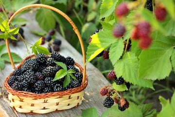 Juicy blackberries in a basket