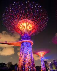 Foto op Plexiglas Singapore Supertree Grove in Singapore