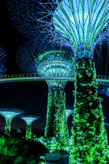 Supertreegarden by night in Singapore