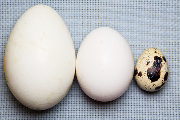 goose, chicken and quail eggs