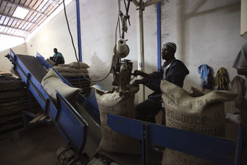 Worker sews cocoa bags in a SAF Cacao cocoa factory in San Pedro