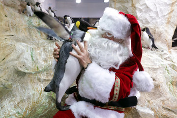 A man dressed as a Santa Claus poses with a penguin at Marineland animal park in Antibes