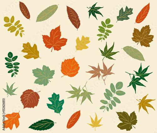 Verschiedene Blätter in sanften, warmen Farben\