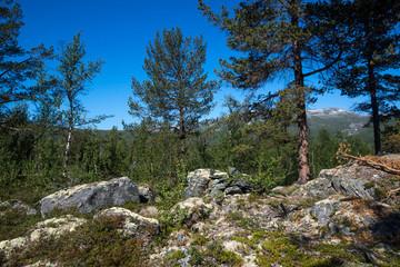 mit dem Wohnmobil durch Norwegen - wilde Natur