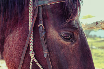 Horizontal Photo depicts a beautiful lovely dark brown horse gazing on a horse yard. Horse face Close up, eye macro view, blurred background, good sunny weather.