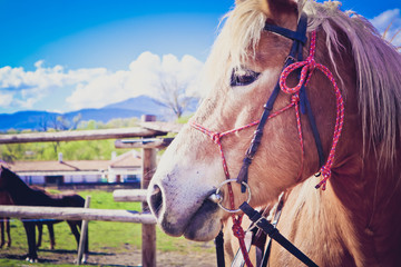 Horizontal Photo depicts beautiful lovely brown and white horse gazing on a horse yard. .Horse face. Close up, blurred background, good sunny weather.