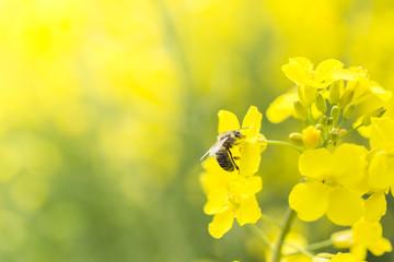 Obraz pszczoła na kwiatku - fototapety do salonu