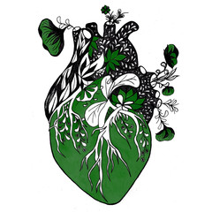 Blooming anatomical human heart. Ink hand drawn illustration of heart in vintage style. Design for your tattoo, logo or other.