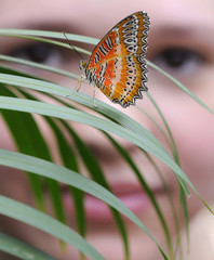 A visitor views a Lace Wing butterfly at the Natural History Museum in London