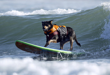 To match Reuters Life! DOGS-SURFING/