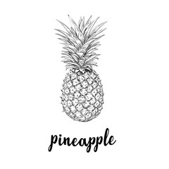 Pineapple sketch is a vintage drawing. Hand drawing vector illustration of pineapple. Lettering