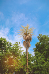 palm leaves tree in temple with blue sky, Landscape, The last flowering tree is the sign of its end