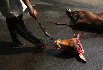 An Indonesian Muslim drags a cow's head after it was slaughtered and the meat distributed to the poor at Matraman mosque in Jakarta