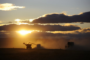 Wheat is harvested on the Stephen and Brian Vandervalk farm near Fort MacLeod