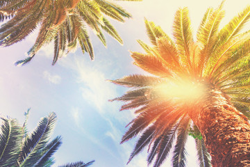 Exotic tropical fresh palm tree on blue sky background, retro toned