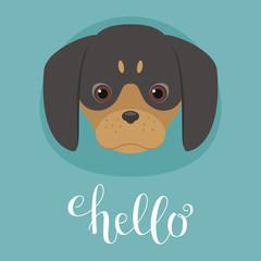 Cute dachshund puppy head