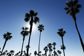 A passenger jet flies past a grove of palm trees during a warm weather spell as it departs San Diego