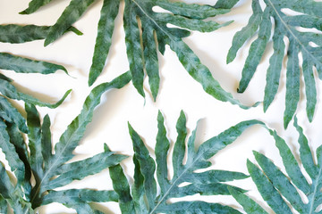 Large green leaves on a white background. Top view