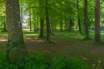 Idyllischer blick in den Wald bei Sonnenlicht
