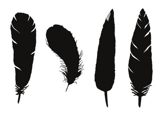 Bird feathers vector