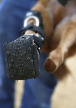 Naki'o, a dog with four prosthetic devices, shows paw with a mountain bike tire tread in Colorado Springs