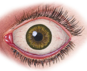 Human eyeball in situ