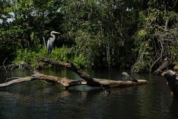 Mangrove swamp flora and fauna Mexico